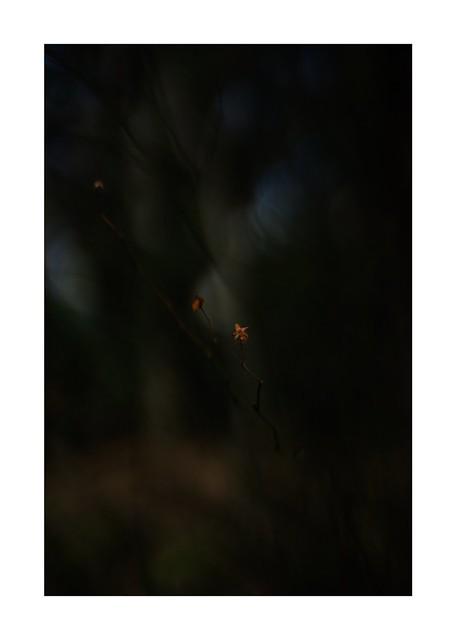 2021/2/27 No. 1/18 -  SONY ILCE‑7M2 / Lomography New Jupiter 3+ 1.5/50 L39/