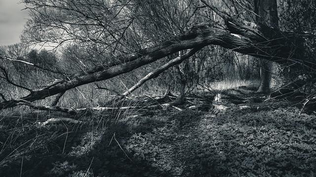 Vollhöfner Wald