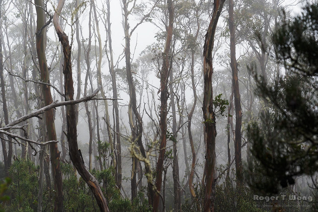 20210510-04-Mist in trees