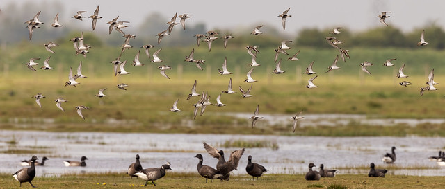 Mixed Waders