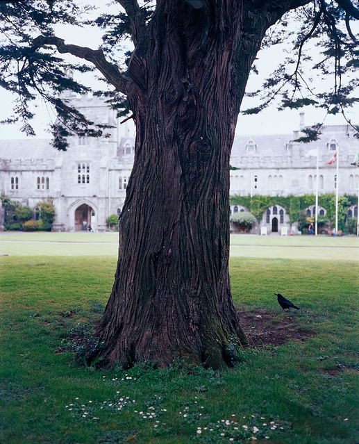 Campus tree