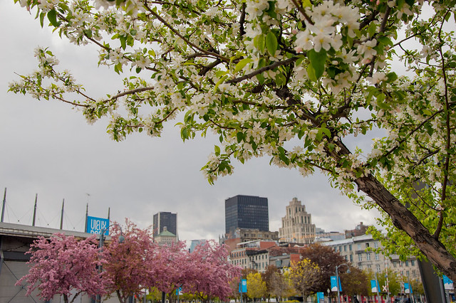 Montreal Old Port in Spring