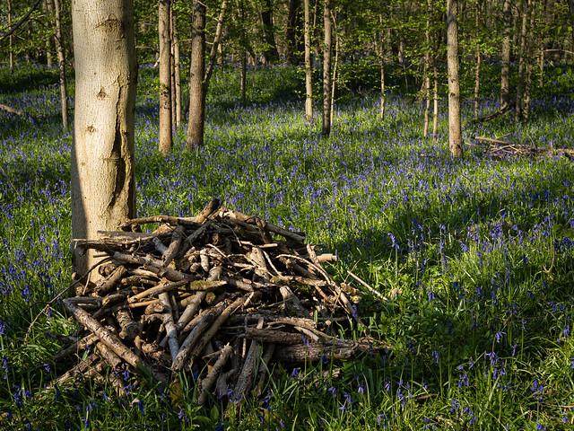 Early Morning Waresley & Gransden Wood