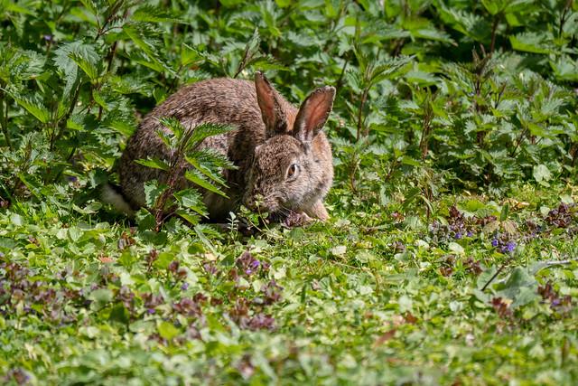Berlin, Tiergarten: Kaninchen - Rabbit