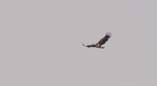 Sea Eagle en route