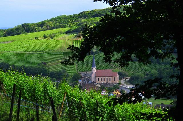 Le vignoble et son église ...
