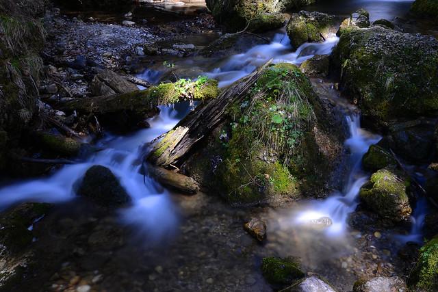 Sunlight * water * green