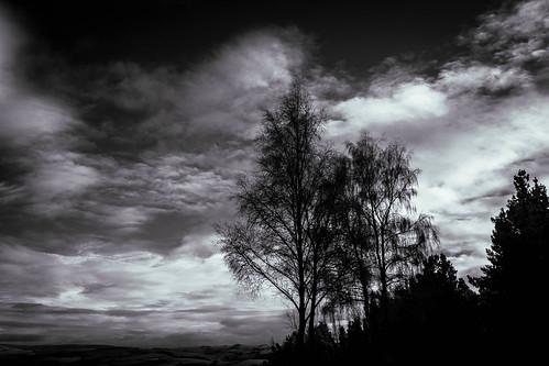 Clywedog  trees IR