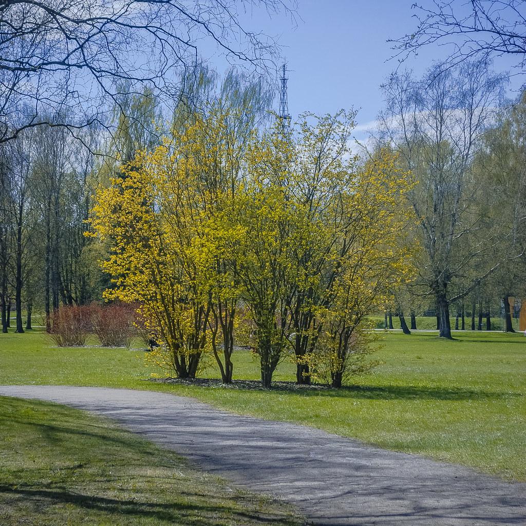 весной в парке 14:04:03 DSC_1972-2