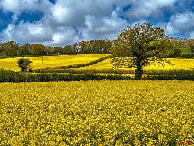 The Yellow Season 2