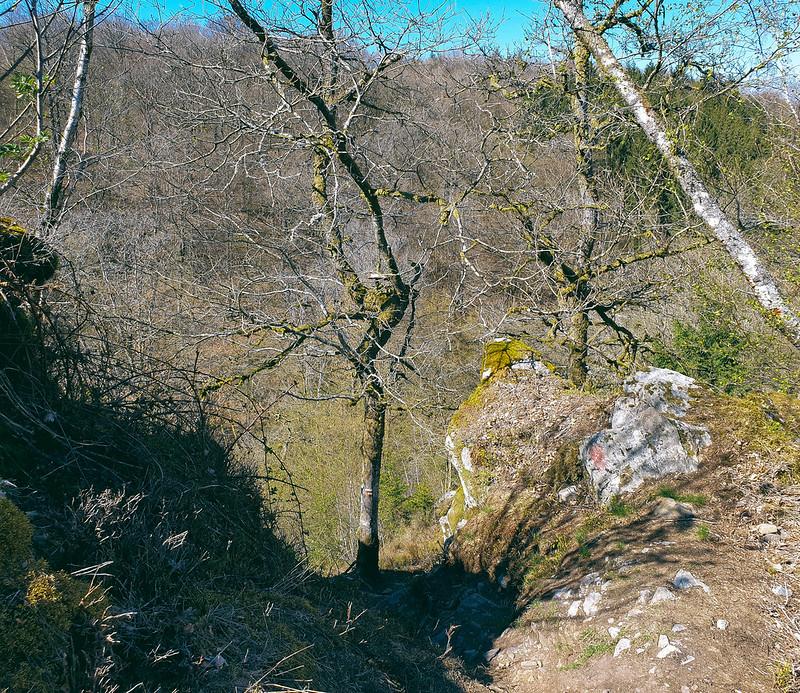 bois de Sainte-Cécile