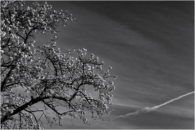 Blossom Splendour...
