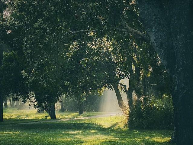 132/365 - Morning Glow