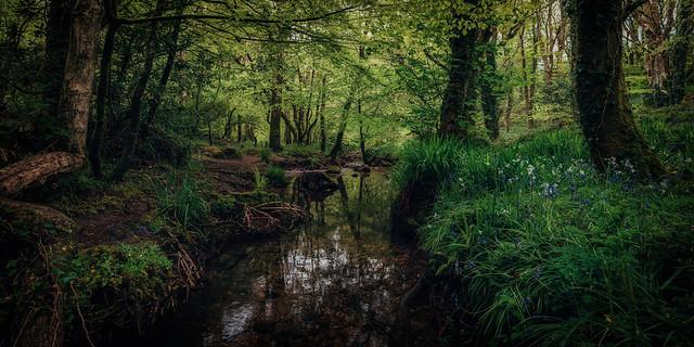 Woodland stream panorama