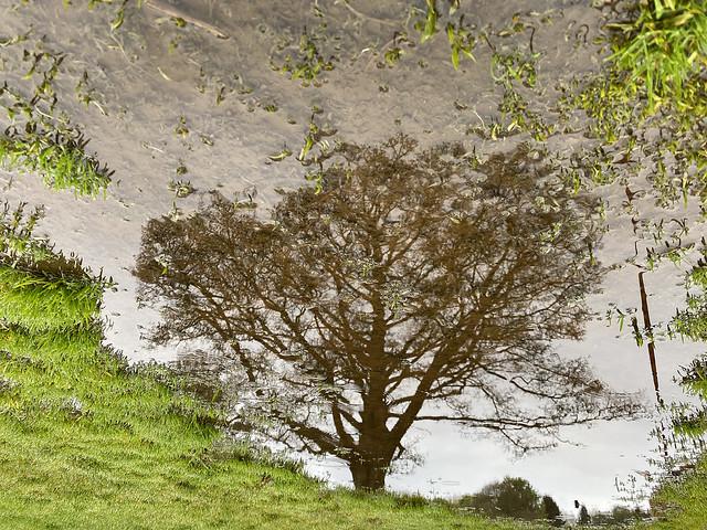 20210513_Tree