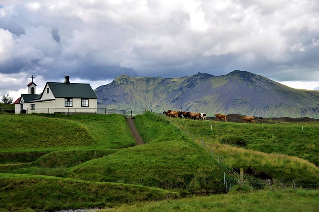 vacas-KELDUR-Islandia