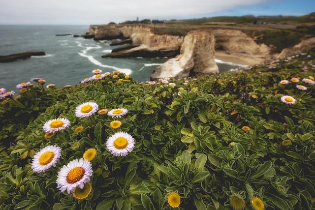 Shark Fin Cove Flowers