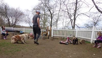 herding the lambs