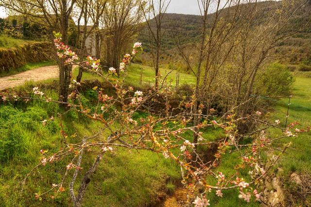 Primavera en Nocito (Huesca)