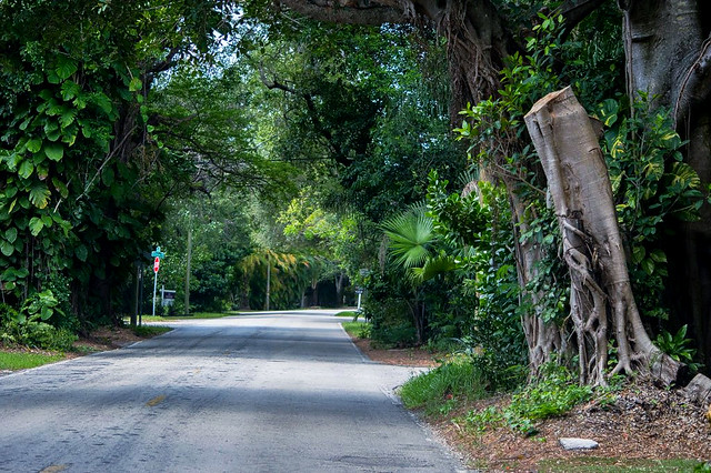 Old Cutler Road/South of Coconut Grove