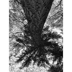 Nordpfad Timke Wälder #nordpfade #kirchtimke #waldeinsamkeit