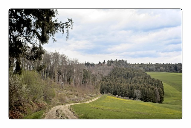 Black Forest open spaces 4