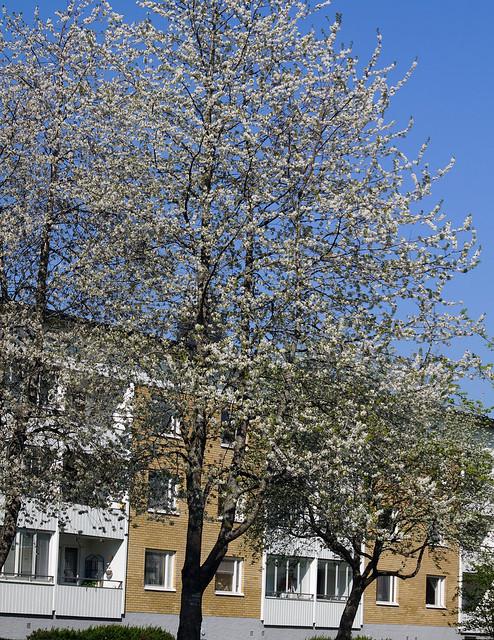 treesC02464