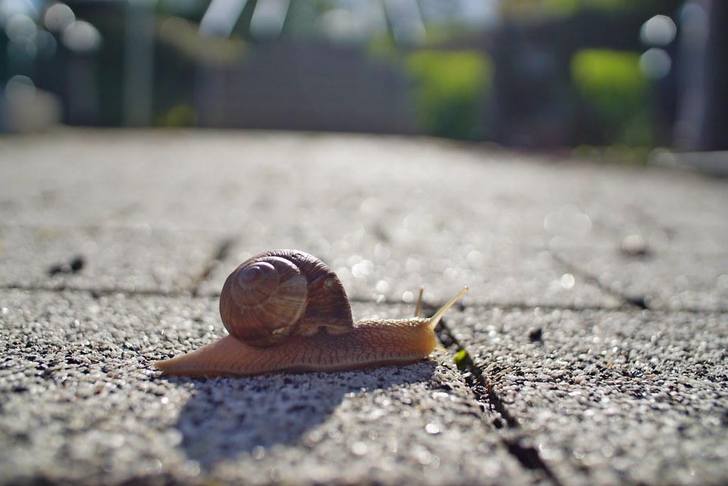 Snail / Schnecke