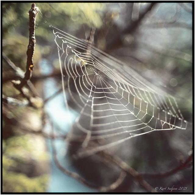 Cobwebs over the river Soča_1983_OM2