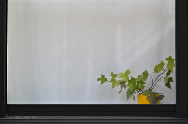 Window Stalking: Yellow Pot