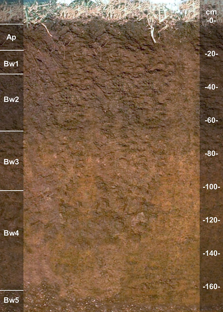 Tuscosso soil series TX