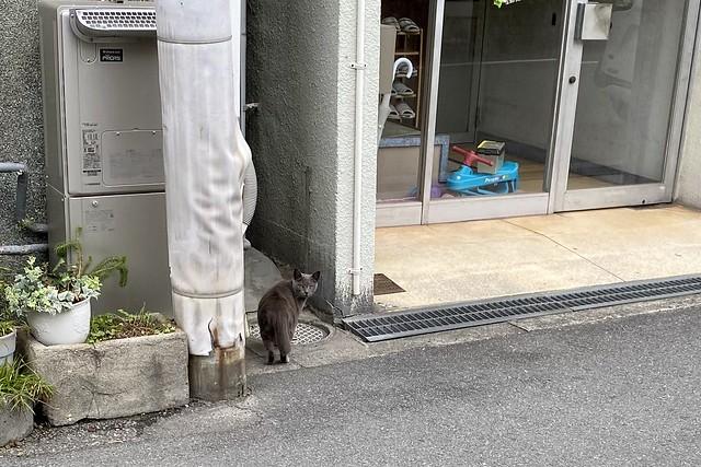 Today's Cat@2021−05−14