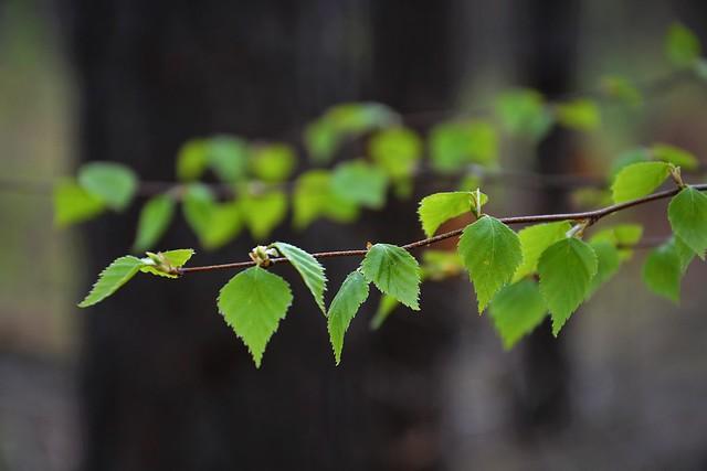 Spring green :)