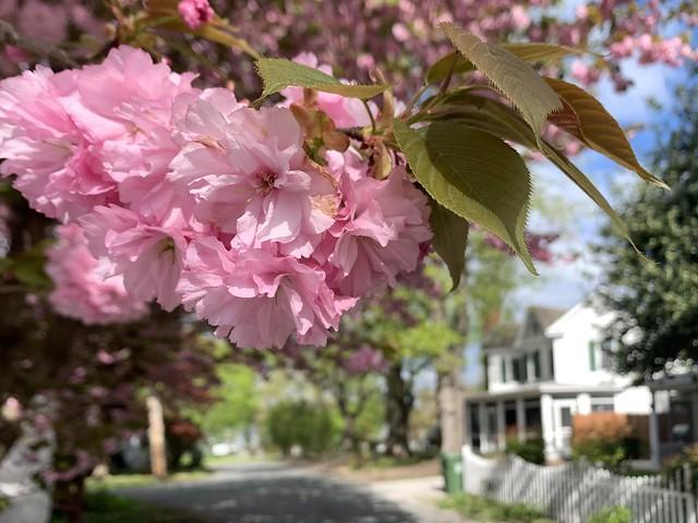 Springtime in the Village