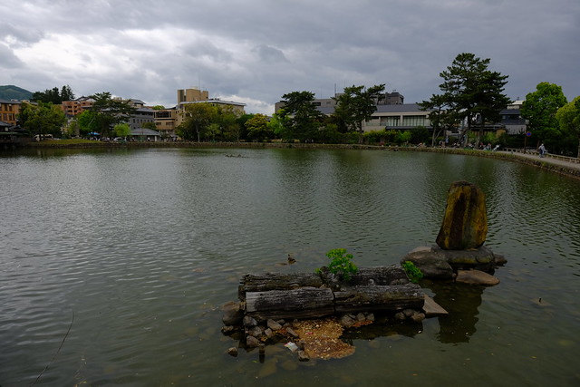 XE3F2858 - Nara Park - 奈良公園  (Japón - Japan - 日本 )