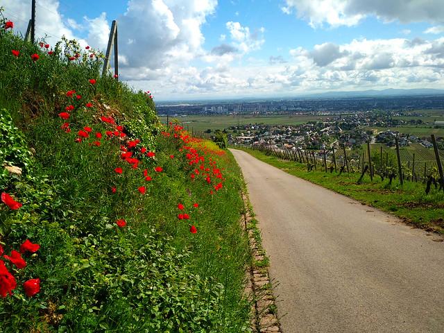 """""""Aucun chemin de fleurs ne conduit à la gloire."""" (Jean de la Fontaine) 'No flower path leads to glory.'"""