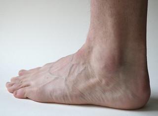 Foot Sculpt Along References