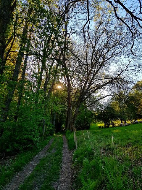 Momente unterwegs im schönen Odenwald