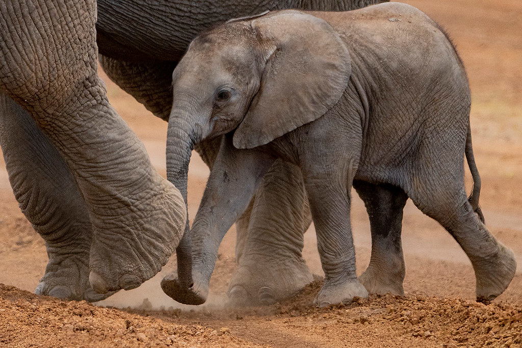 Kenya Photography Safari September 2021