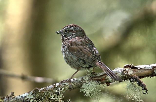 Little Birdie In The Forest