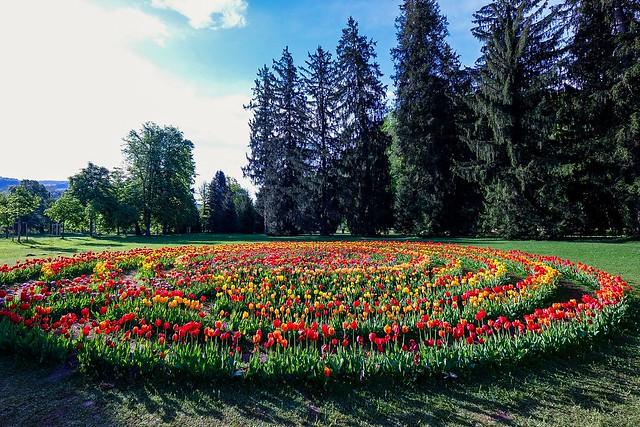 Tulip maze