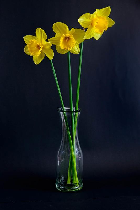 Daffodil-039.jpg