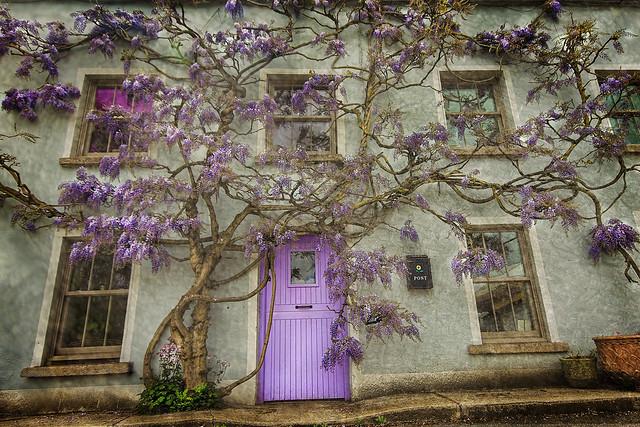 tree house wisteria