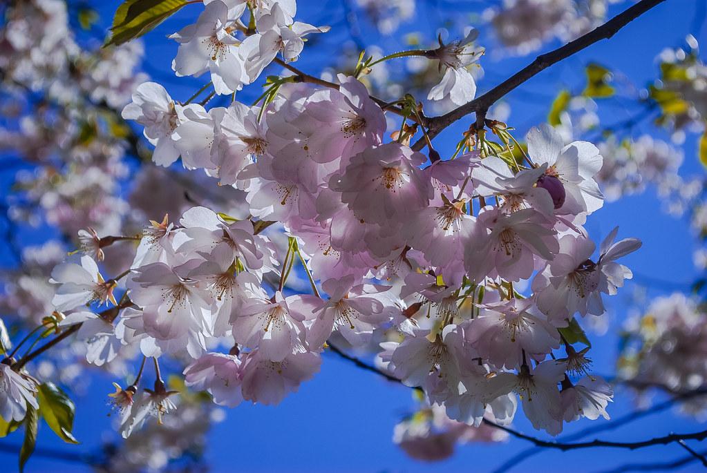 весной в парке Gaisma!! 14:08:28 DSC_2000
