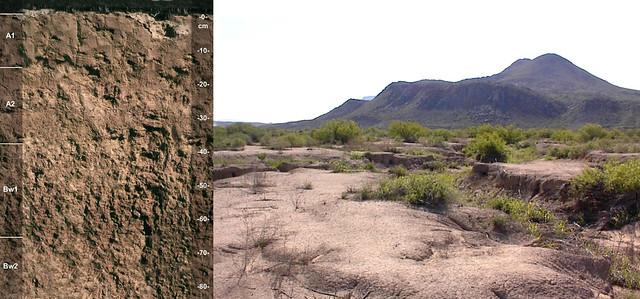 Tornillo soil and landscape TX