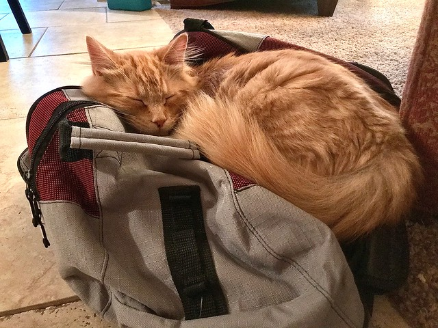 Gym Bag Slumber