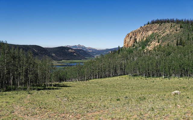 A Grass Meadow, Forest and Mountains of the Rio Grande National Forest