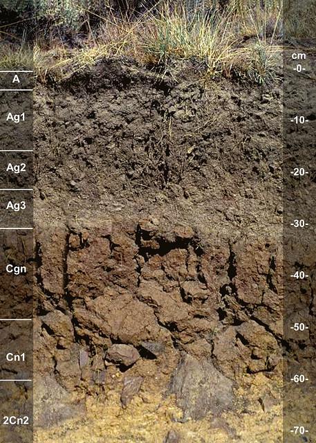 Triangle soil series ID