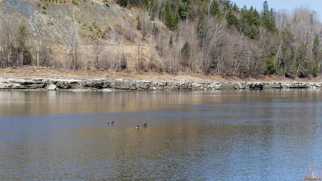 Rivière Chaudière, printemps, spring - Beauce, PQ, Canada - 6296