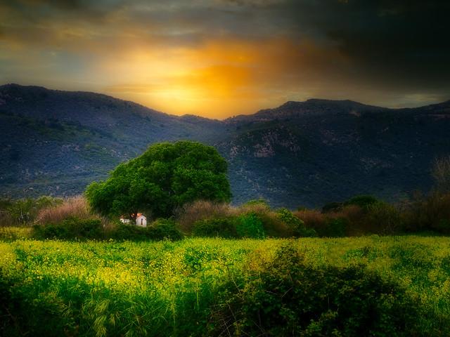 Chapel in the meadow